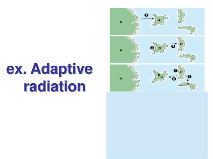 ex. Adaptive      radiation