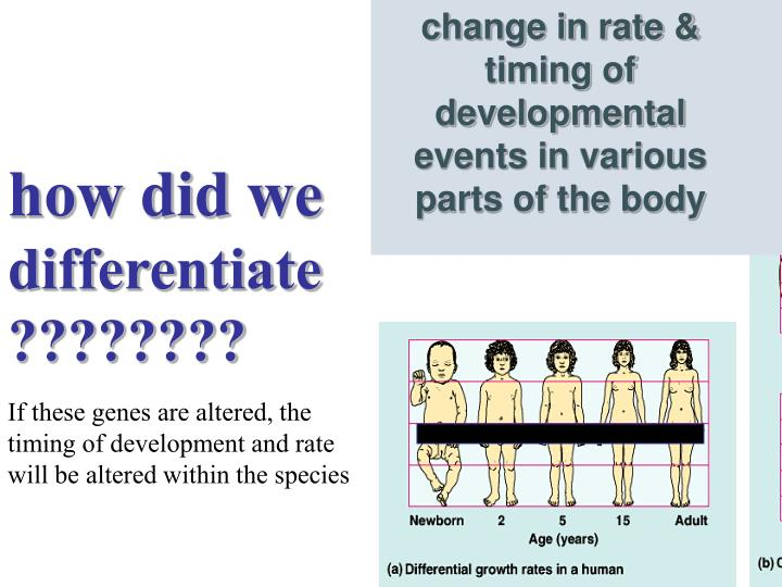 change in rate & timing of developmental events in various parts of the body