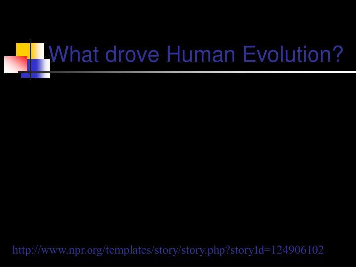 What drove Human Evolution?