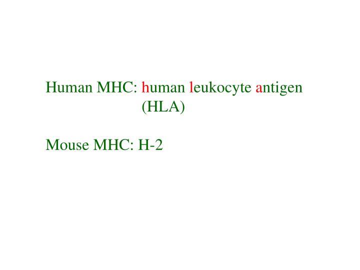 Human MHC: