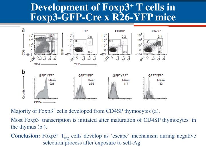 Development of Foxp3