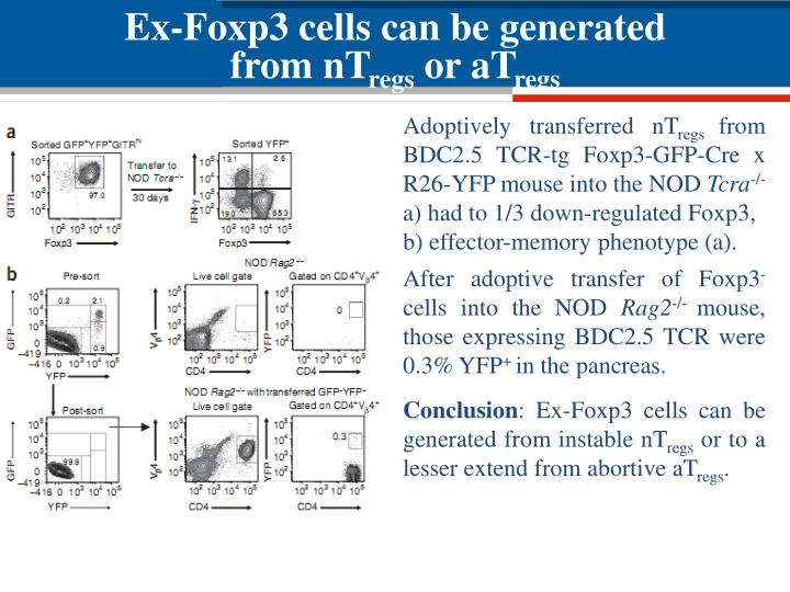Ex-Foxp3 cells can be generated