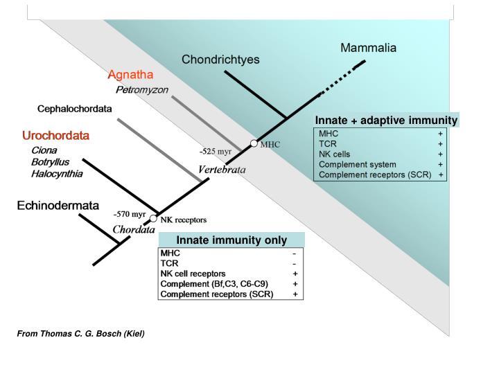 Innate + adaptive immunity