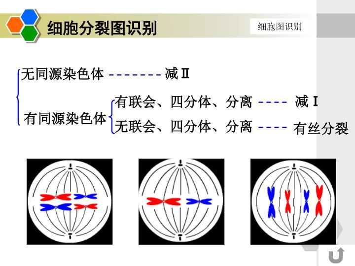 细胞分裂图识别