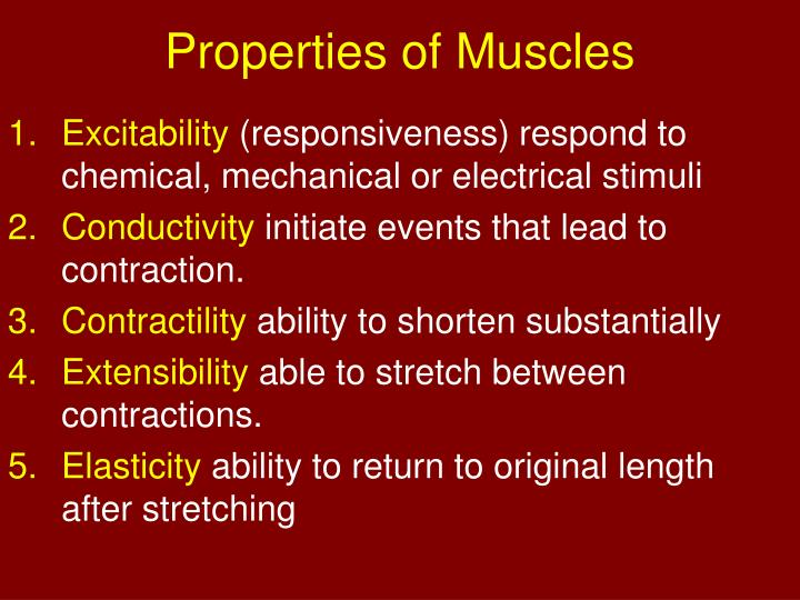 Properties of muscles