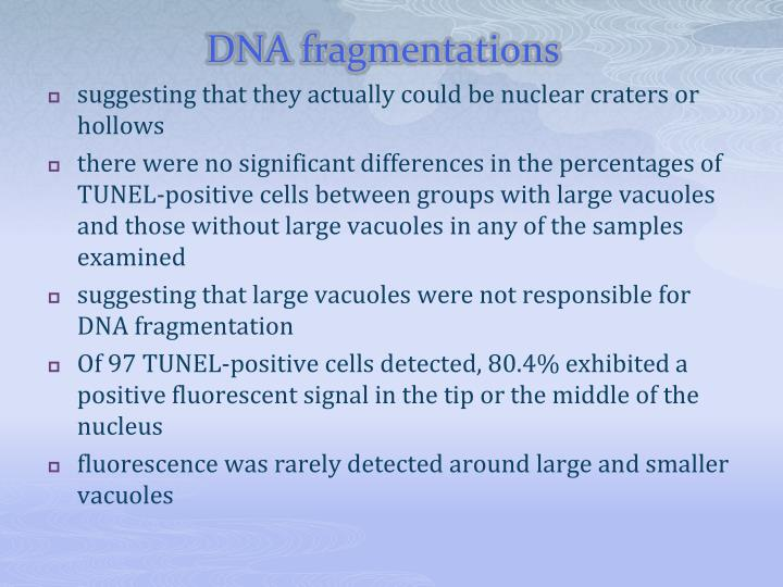 DNA fragmentations