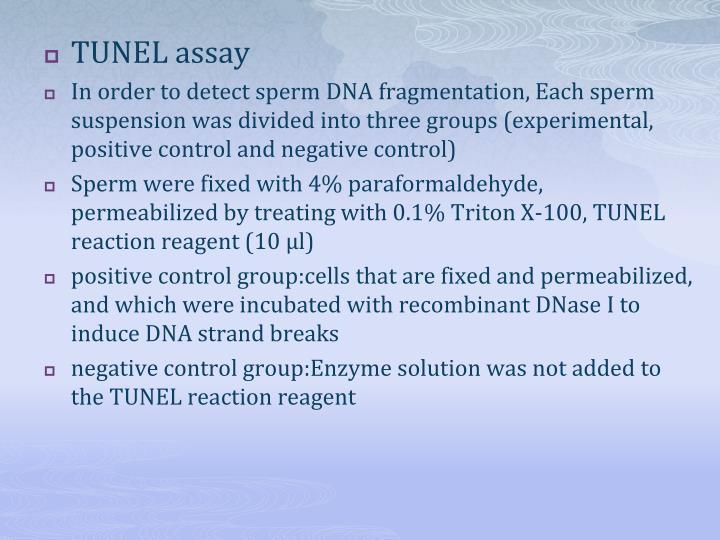 TUNEL assay