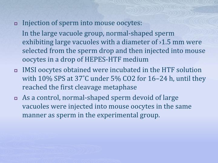 Injection of sperm into mouse oocytes: