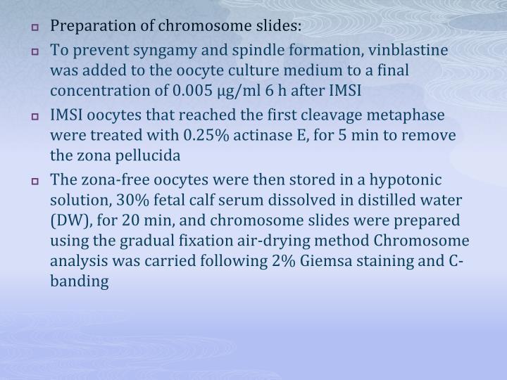 Preparation of chromosome slides: