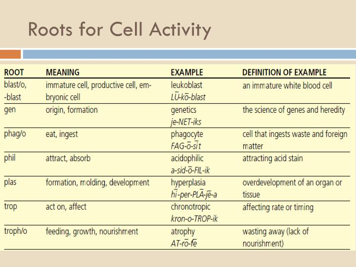 Roots for Cell Activity