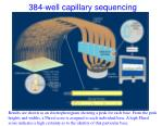 384 well capillary sequencing