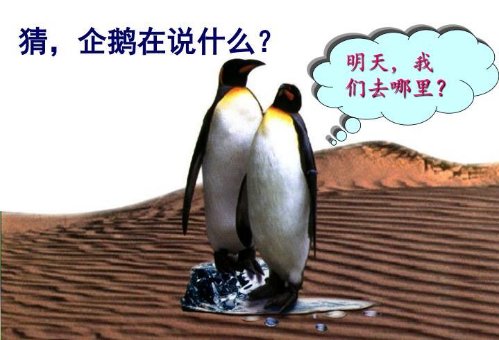 猜,企鹅在说什么?