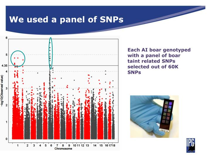 We used a panel of SNPs