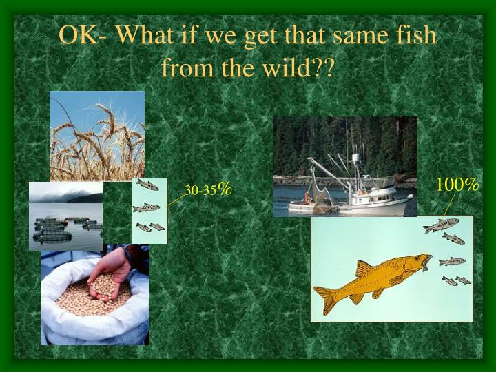 OK- What if we get that same fish from the wild??