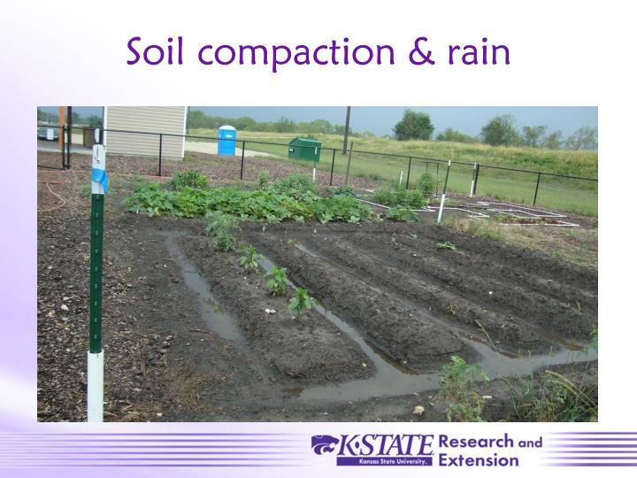 Soil compaction & rain