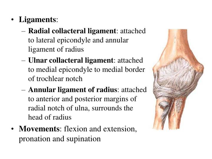 PPT - Section 3 Joints of upper limb PowerPoint Presentation - ID ...