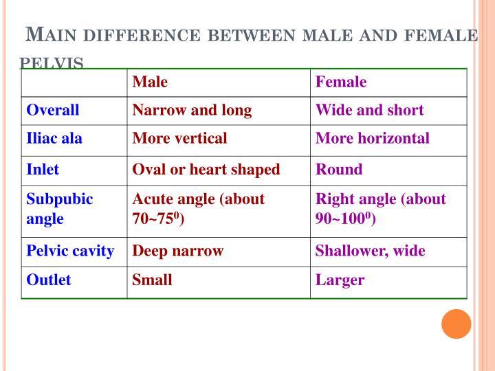 male and female pelvic girdle