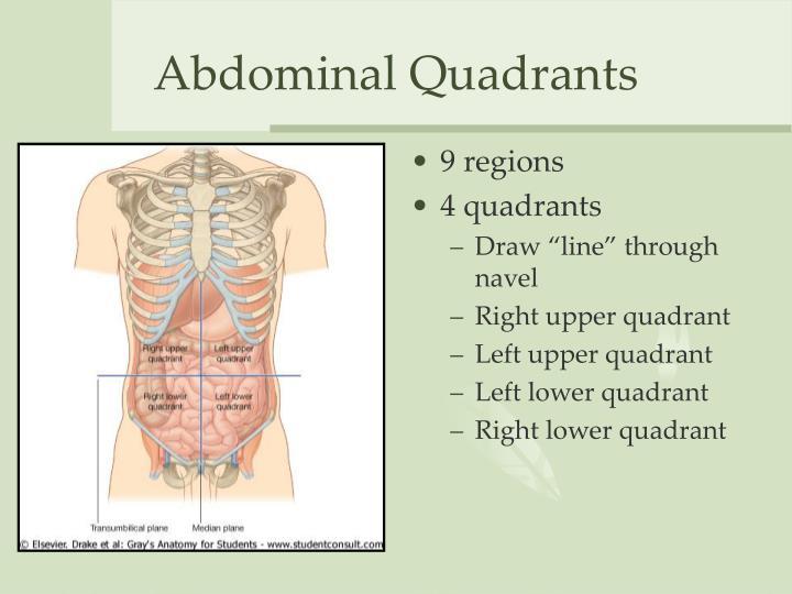 Ppt The Abdomen Powerpoint Presentation Id3330064