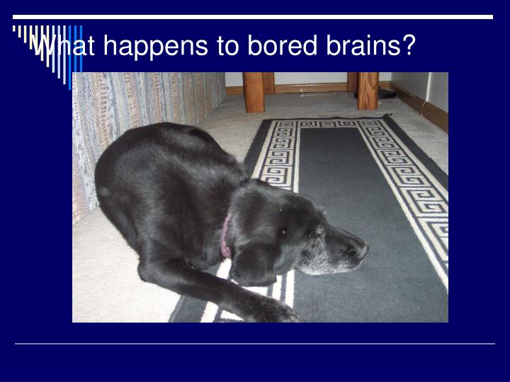 What happens to bored brains?