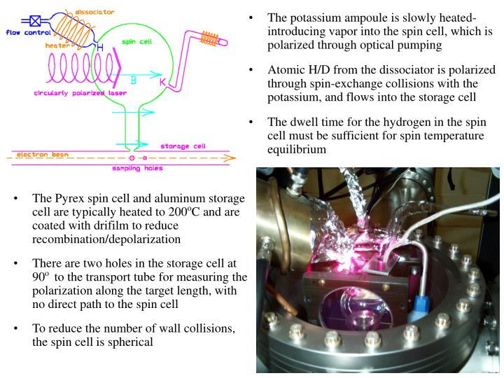 The potassium ampoule is slowly heated- introducing vapor into the spin cell, which is polarized through optical pumping