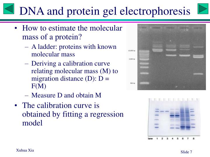 DNA and protein gel electrophoresis