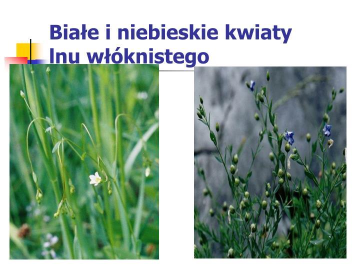 Białe i niebieskie kwiaty