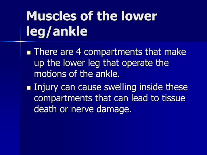 Muscles of the lower leg/ankle