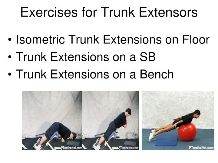 Exercises for Trunk Extensors