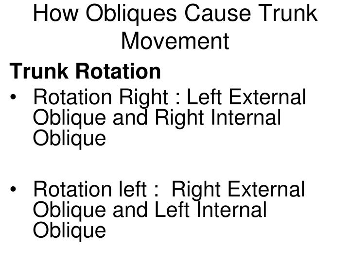How Obliques Cause Trunk Movement