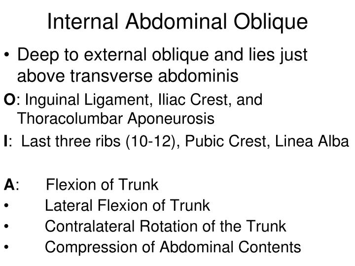 Internal Abdominal Oblique