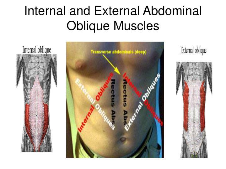 Internal and External Abdominal Oblique Muscles