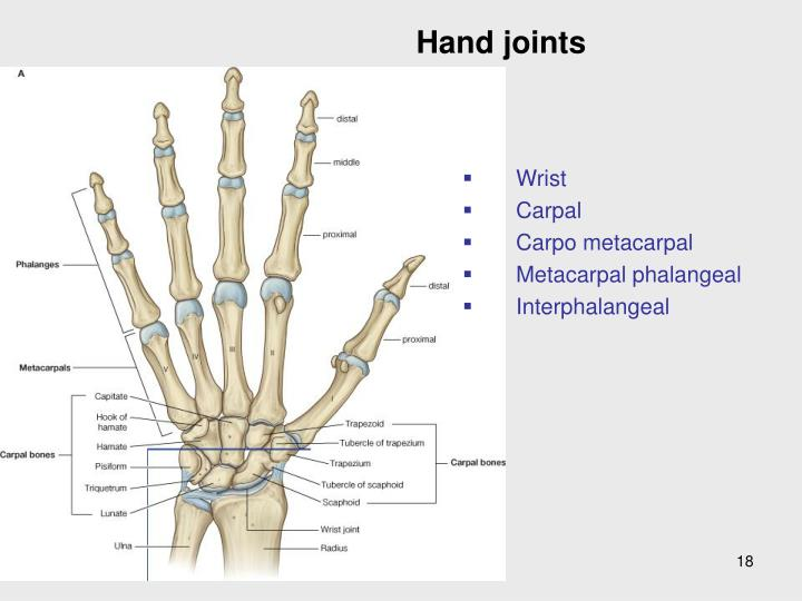 Hand joints