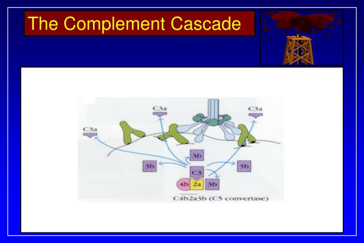 The Complement Cascade