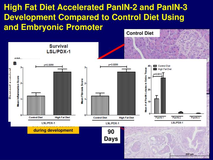 High Fat Diet Accelerated PanIN-2 and PanIN-3 Development Compared to Control Diet Using and Embryonic Promoter