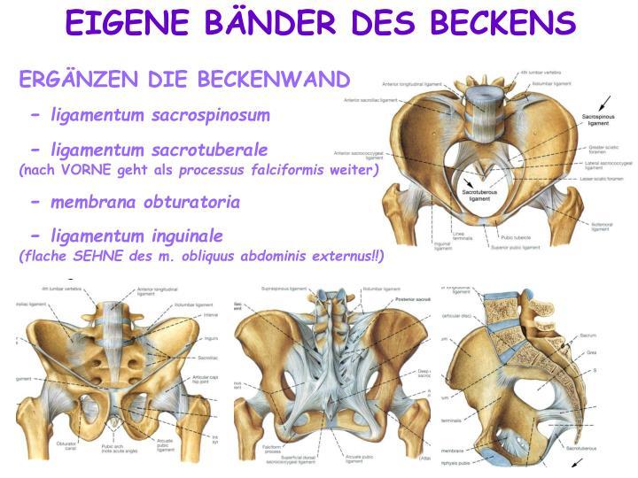 PPT - BECKEN (KNOCHEN UND BÄNDER) ARTICULATIO COXAE PowerPoint ...