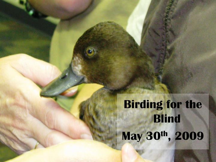 Birding for the Blind