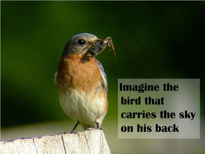 Imagine the bird that carries the sky on his back