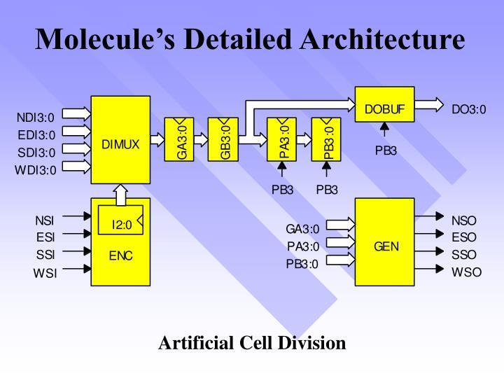 Molecule's Detailed Architecture