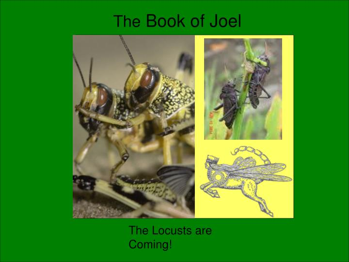 the book of joel n.
