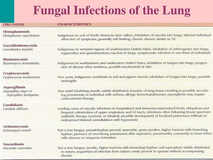 Fungal Infections of the Lung
