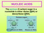 nucleic acids3