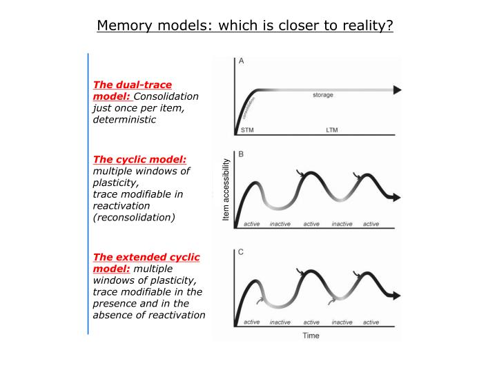 Memory models: which is closer to reality?