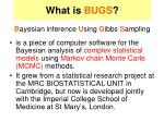 what is bugs