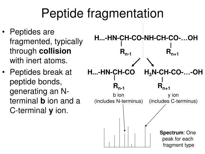 Peptide fragmentation