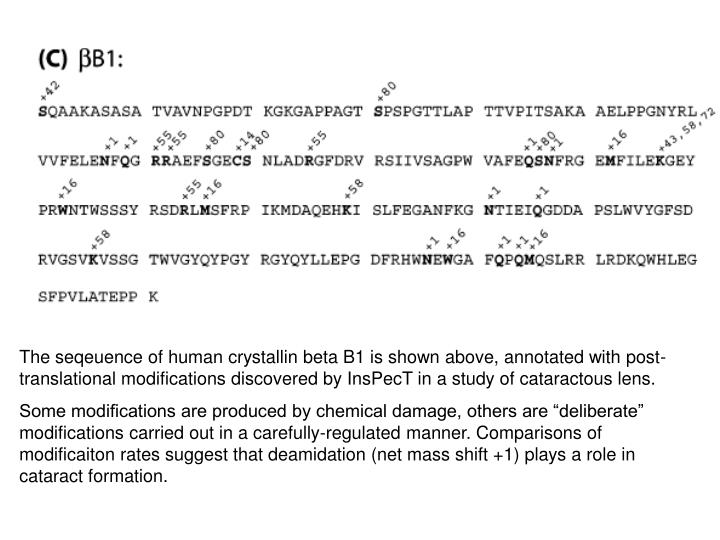 The seqeuence of human crystallin beta B1 is shown above, annotated with post-translational modifications discovered by InsPecT in a study of cataractous lens.