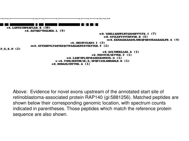 Above:  Evidence for novel exons upstream of the annotated start site of retinoblastoma-associated protein RAP140 (gi:5881256). Matched peptides are shown below their corresponding genomic location, with spectrum counts indicated in parentheses. Those peptides which match the reference protein sequence are also shown.