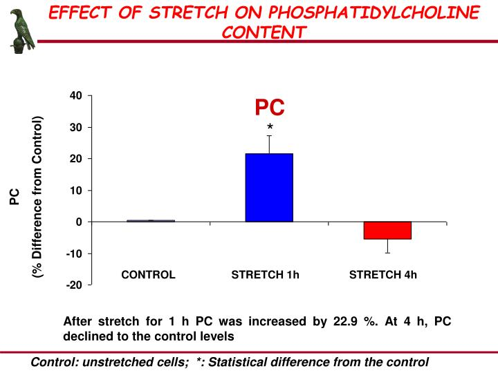 EFFECT OF STRETCH ON PHOSPHATIDYLCHOLINE CONTENT