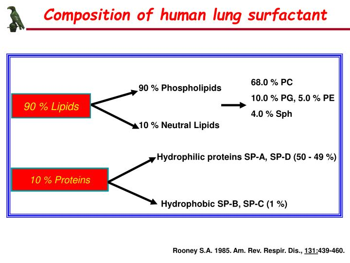 Composition of human lung surfactant