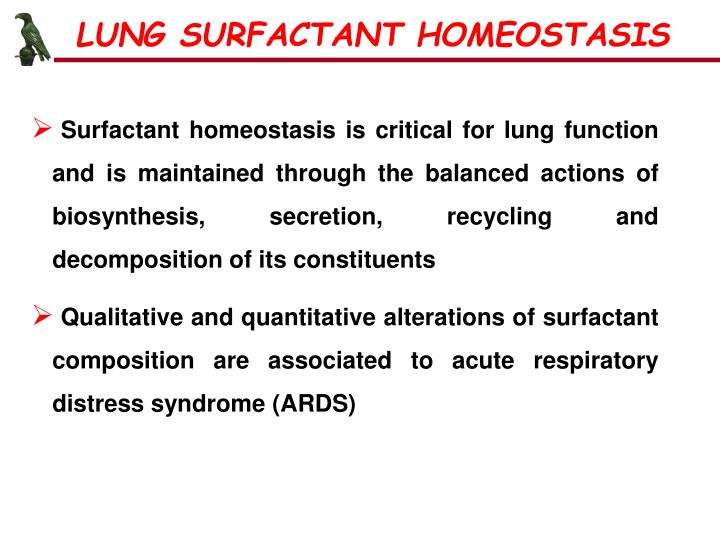 LUNG SURFACTANT HOMEOSTASIS