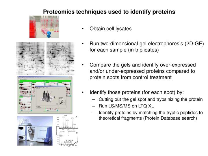 Proteomics techniques used to identify proteins